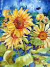 Sunflowers_in_field
